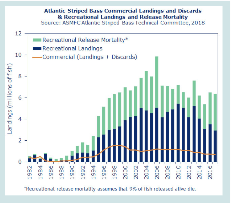 atlantic striped bass commercial and recreational landings and releases. this is a report by the ASMFC which contributed to Striped Bass fishing season closures
