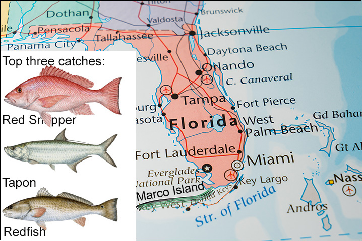 Florida map showing Marco Island and top three fish species to fish for there: Red Snapper, Tarpon, and Redfish