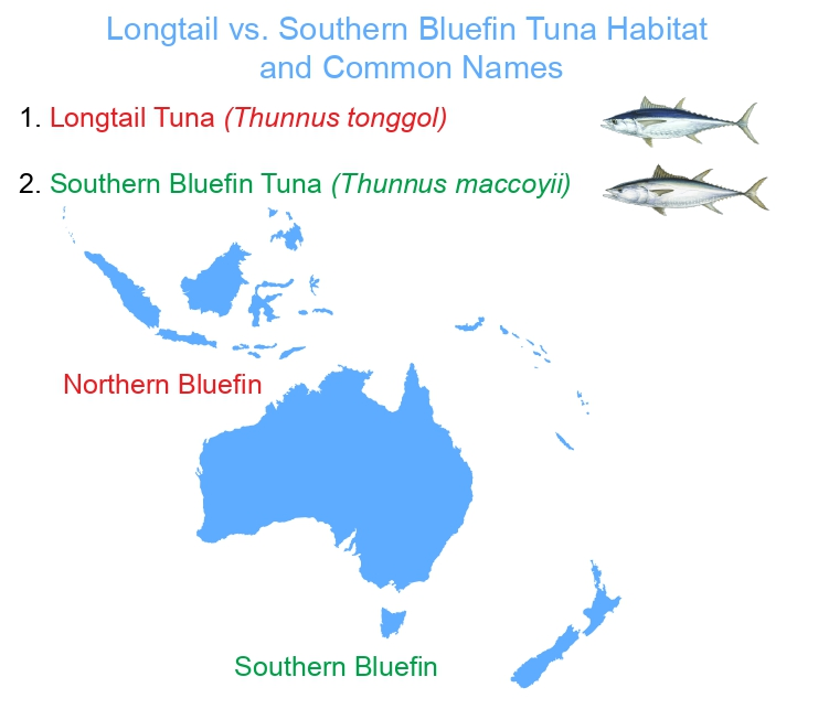 longtail vs southern bluefin tuna habitat and confusing fish names