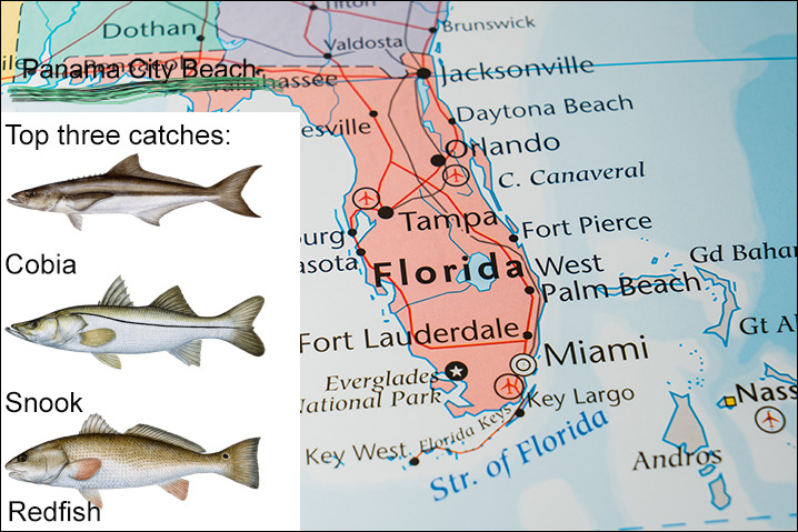 Florida map showing Panama City Beach and top three fish species that PCB has: Cobia, Snook, and Redfish
