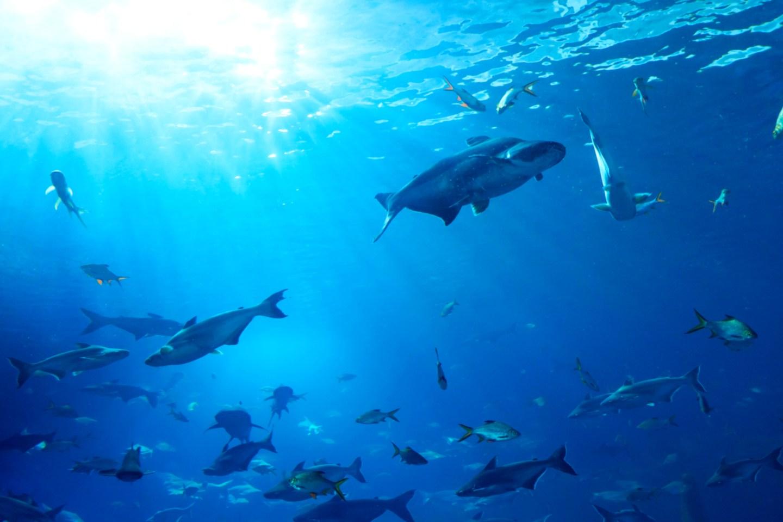 a school of fish underwater