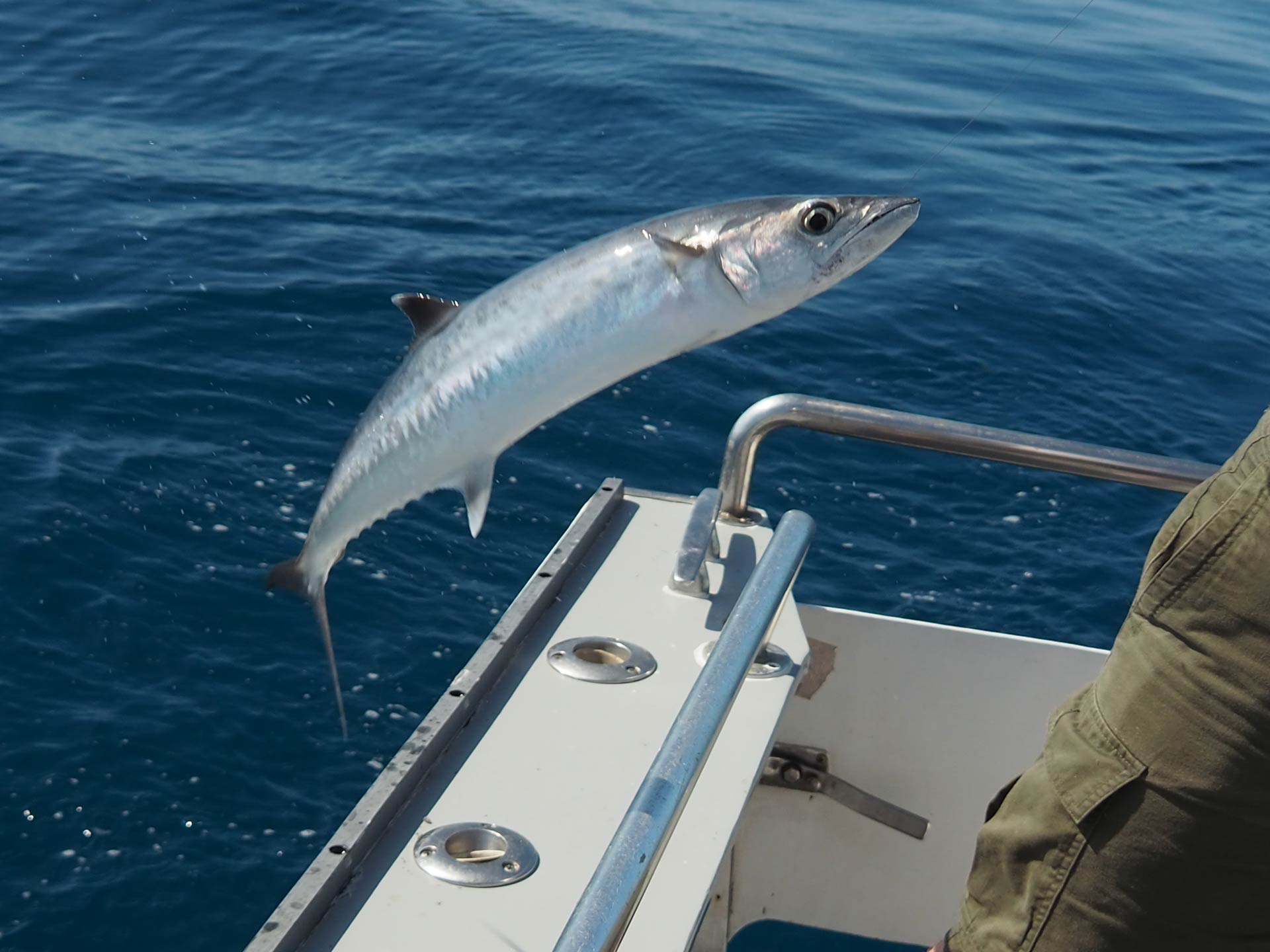 A King Mackerel jumping onto a boat