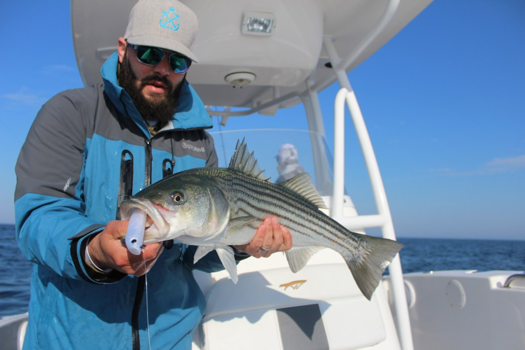 an angler holding a striped bass on a boat