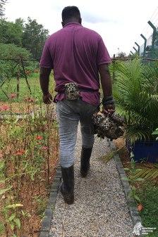 Maduranga making his way into the wetland