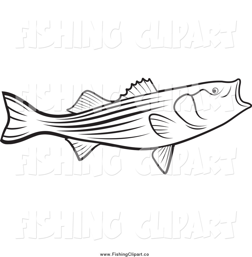 white bass fish coloring pages