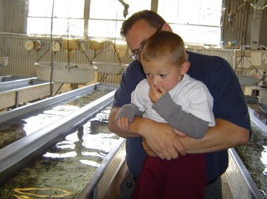 Looking at the fry at Moccassin Creek Fish Hatchery.