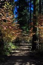North Grove Trail