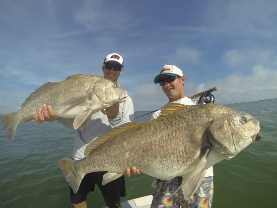 Black Drum on Fly and spin tackle Sanibel Island