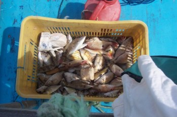 Some of our catch
