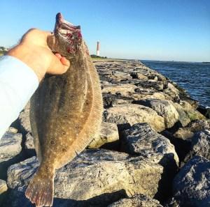 Barnegat Inlet Fluke Fishing