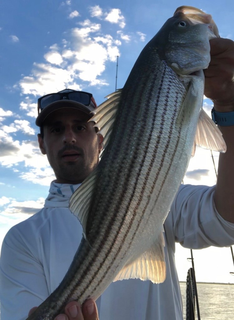 John Bell is getting into some nice striped bass in the back bay. These heathy ones are great to see at this time of the year!