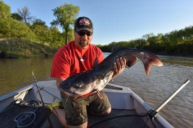 bigacatfish