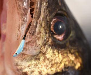 fishing product news - fishing tackle retailer, Hard Baits