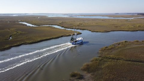 Ten Years Later: How Far Fish Habitat Has Come Since the Gulf Oil Spill