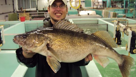 Better Walleye Fishing: Iowa Research Leads the Way
