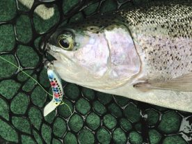 The smaller sizes of Mag Lip are deadly when trolled for trout.