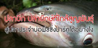 ปลาบึก