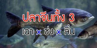 ปลาจีน
