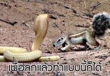 งูเห่า