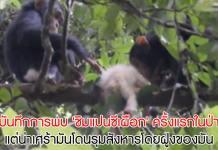 ลิงเผือก