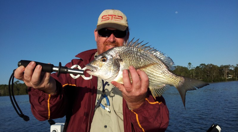 Lake Macquarie Bream - 51cm