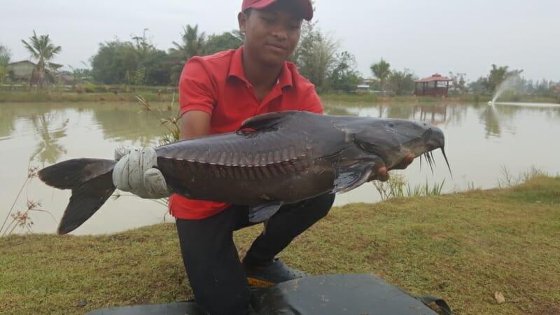 ripsaw-catfish.jpg?resize=800%2C450
