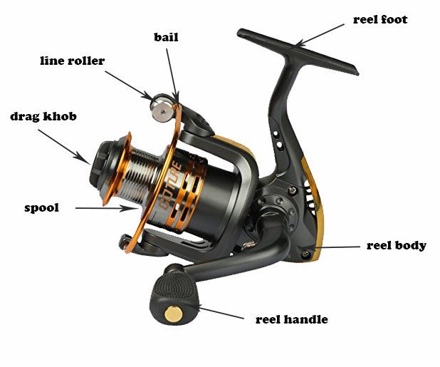 Part of a Spinning Reel