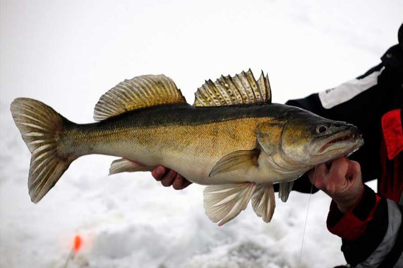 uhvatiti mjesto za upoznavanje s ribama povežite zlatna pravila