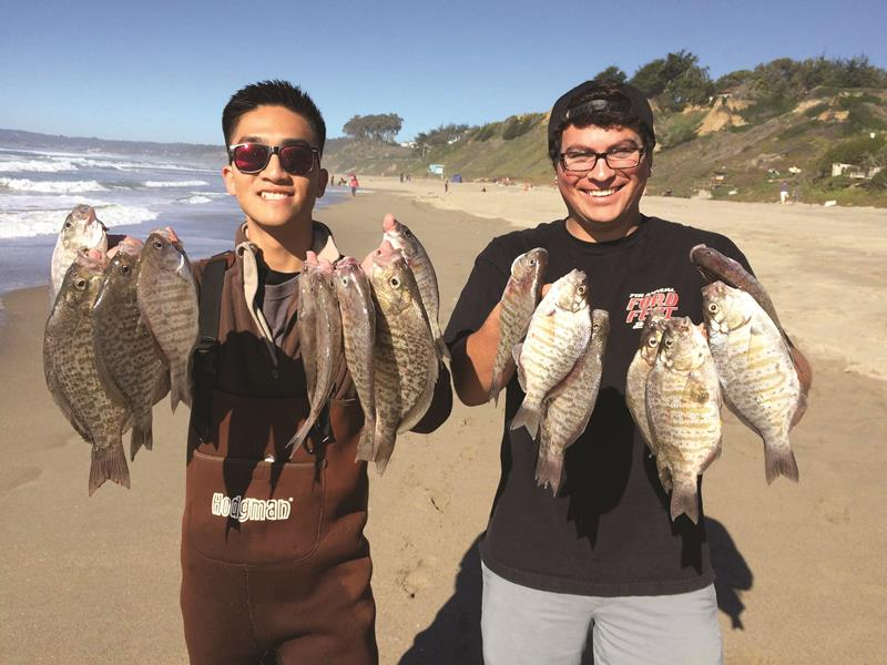 These anglers enjoyed great surf fishing action, loading up on nice collection of ocean perch. There are 23 different varieties of surfperch. All them fight hard when hooked and provide excellent eating.