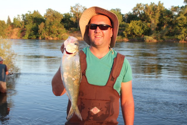 Unveiling The Mysteries of American River Shad