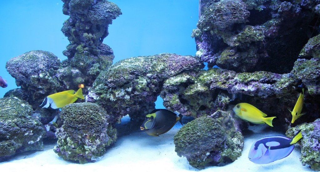 Best saltwater fish foods 2018 buyer 39 s guide and reviews for Saltwater fish food