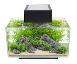 fluval edge aquarium 6 gallon m