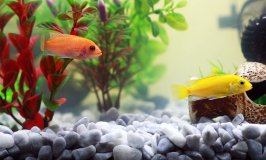 Best 20 Gallon Fish Tank Stands