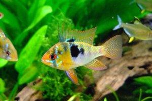 Best Freshwater Aquarium Test Kit