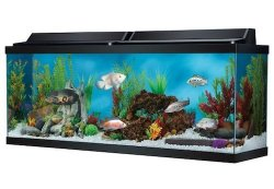 top fin 50 gallon hooded aquarium