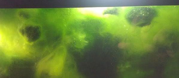 Algae in Tank
