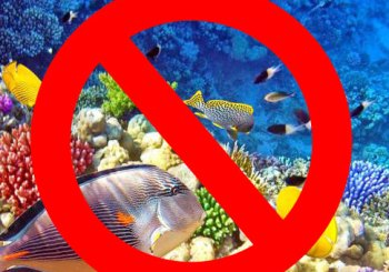 No Indonesian Corals or Fish