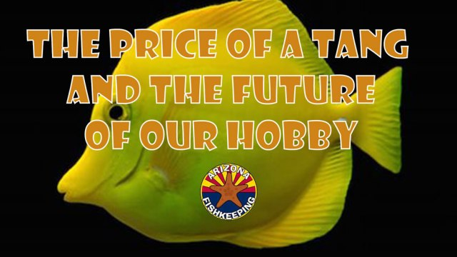 The Price of a Tang and the Future of Our Hobby