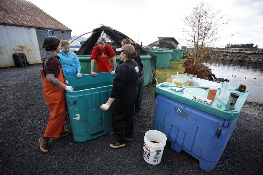 Salmon Culture 2016