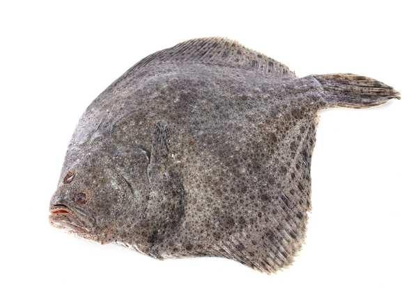 Calcan marea neagra 2-3kg
