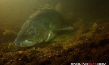 Where to find early spring walleye