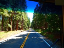 The drive through the mountains was beautiful.