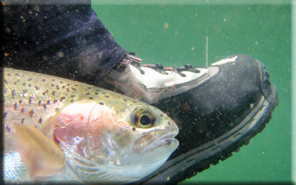 Boot Trout
