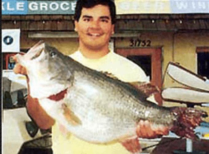 Michael Arujo's huge bass