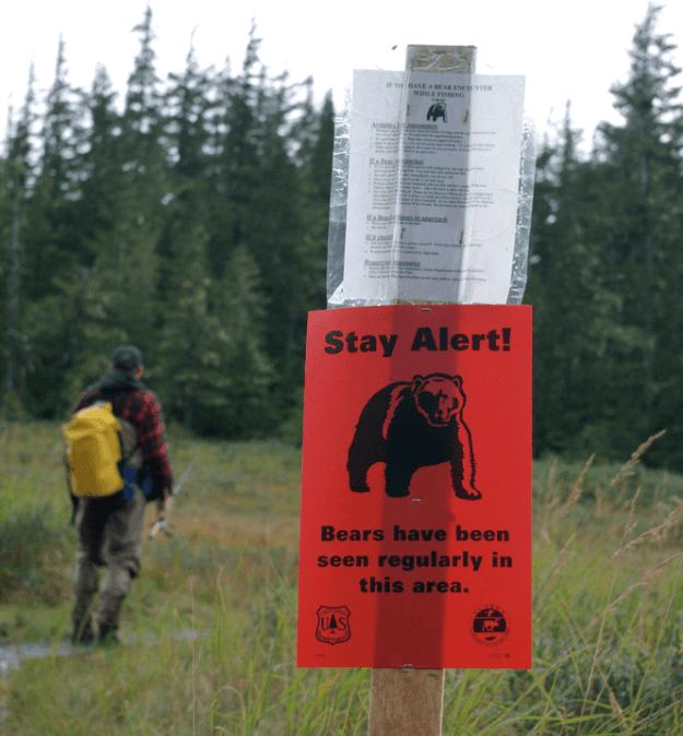 Bear Scare