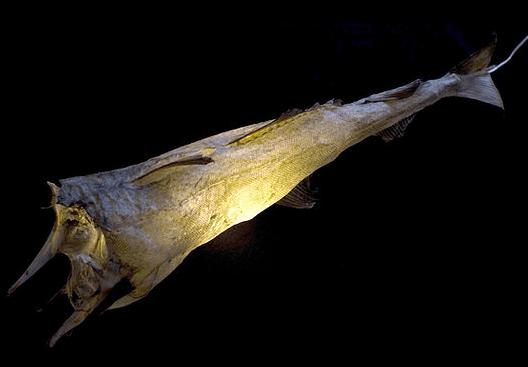 Cod Light
