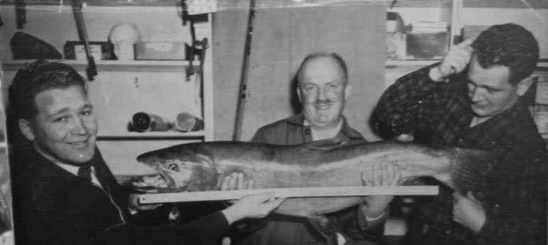36-pound-steelhead