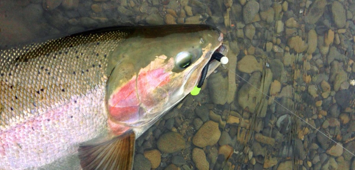 3 plastic worm rigs to help you catch more steelhead for Steelhead fishing lures