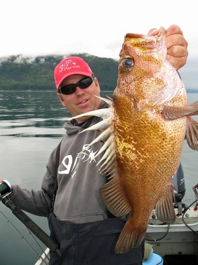 Giant Rockfish