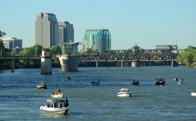 Each year, hundreds of thousands of Chinook salmon swim right through the heart of downtown Sacramento
